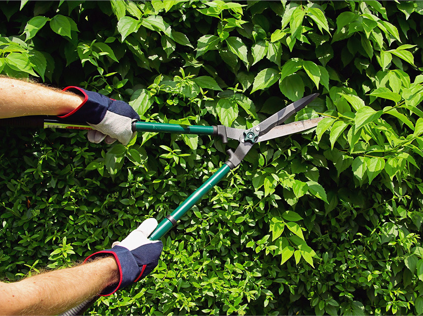 how to prune trees and shrubs  builders, Natural flower